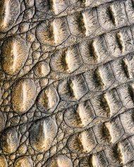 crocodileskin_